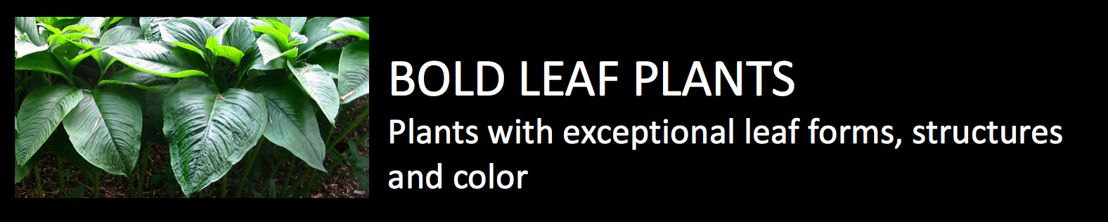 Exotics Bold leaf plants plants with exceptional leaf forms structures and color