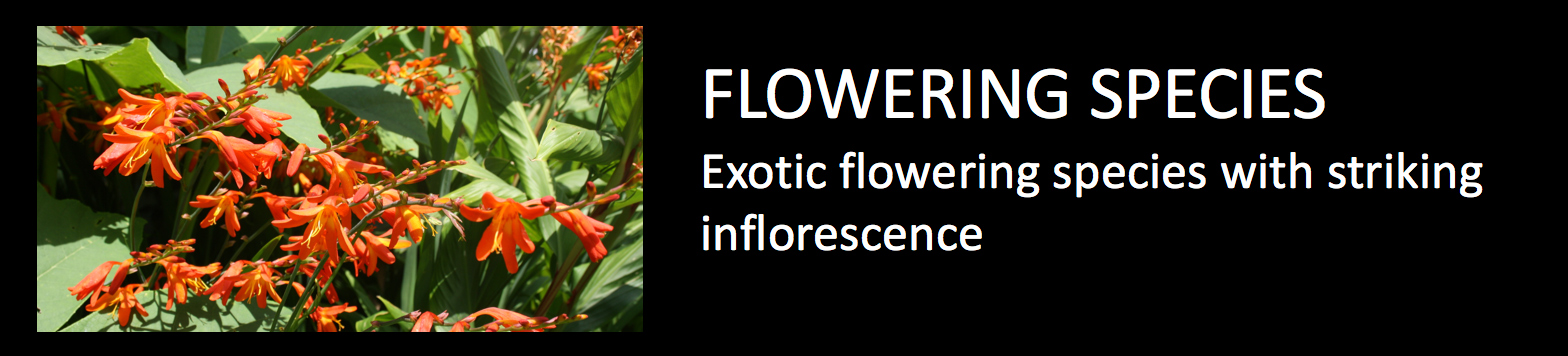Exotics Flowering species exotic flowering species with striking inflorescence