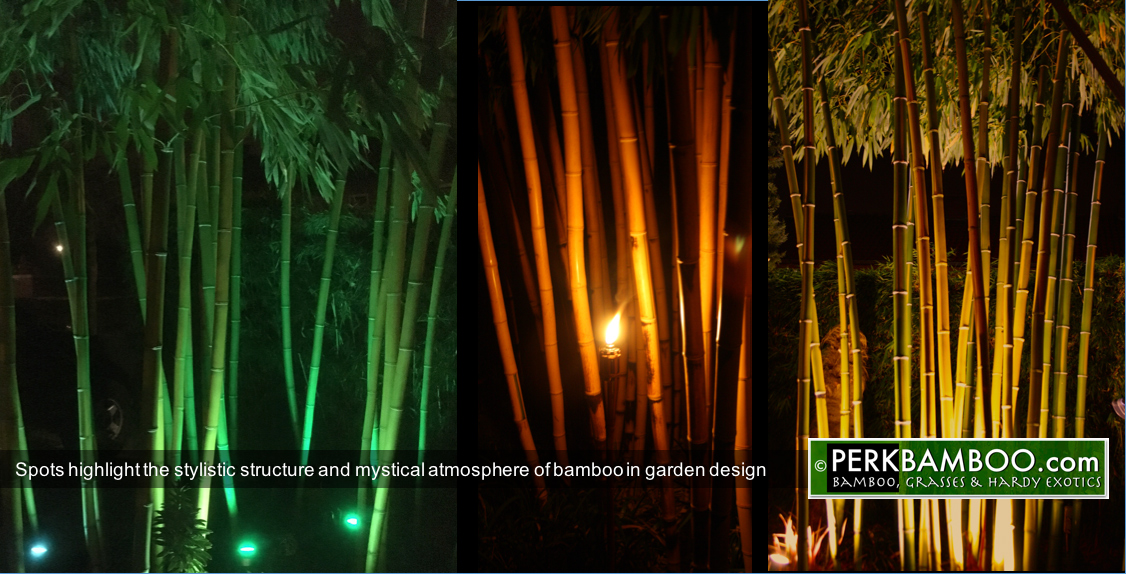 Spots highlight the stylistic structure and mystical atmosphere of bamboo in garden design