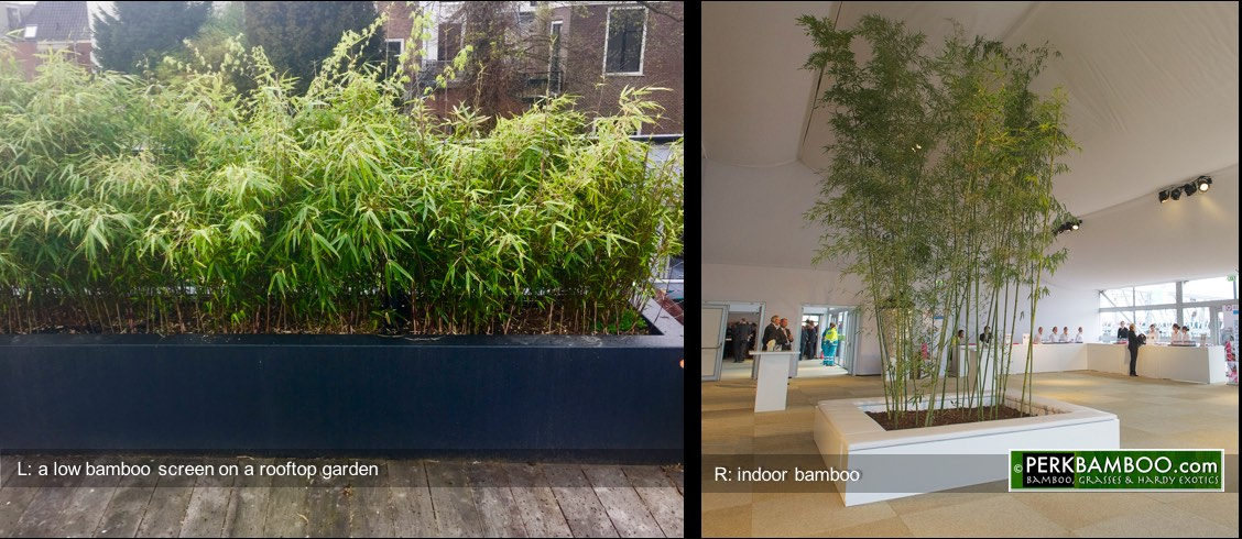 L: a low bamboo screen on a rooftop garden. R: indoor bamboo