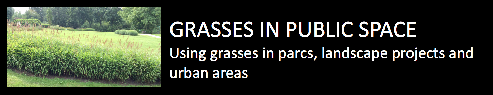Grasses in public space using grasses in parcs landscap projects and urban areas