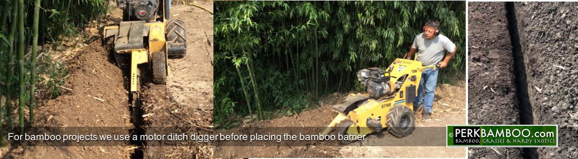 For bamboo projects we use a motor ditch digger before placing the bamboo barrier
